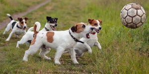 норные породы собак мальчики