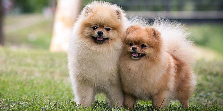 маленькие породы собак мальчиков