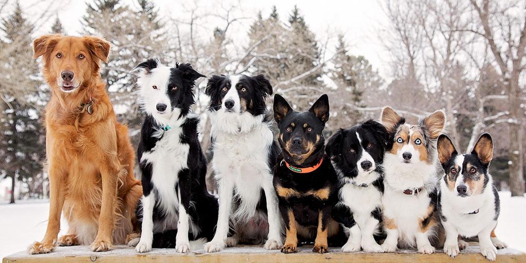 породы собак девочек