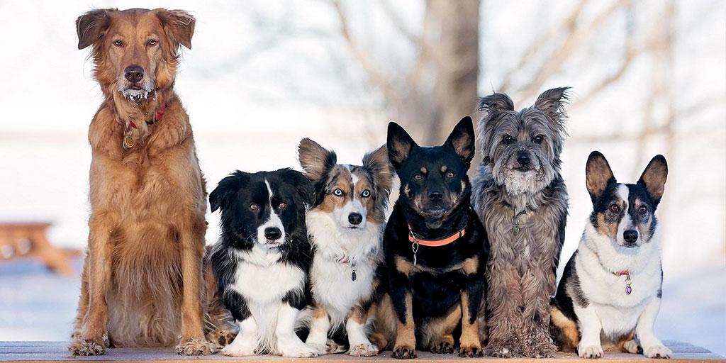 породы собак мальчиков